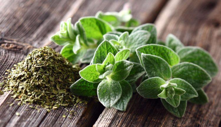 Le thé aux plantes qui guérit les infections de la gorge, de la grippe et des sinus