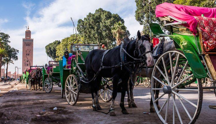 Une balade en calèches à Marrakech pour sensibiliser à l'importance de la relance du secteur du tourisme